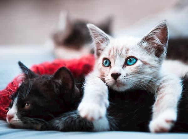Cat A - jpg vs webp